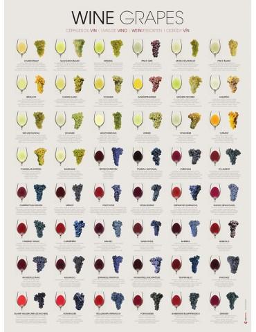 葡萄酒葡萄 - Rolled